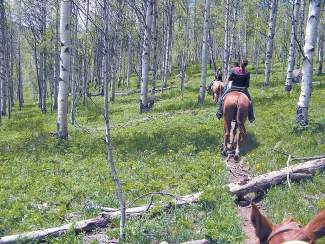 Beaver Creek Stables offers one- and two-hour trail rides, three-hour picnic rides and trail rides to Beaver Lake. Rides are available for ages 7 and up.