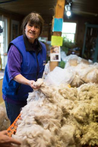 Cass Galloway, co-owner of Big Hat Ranch, shows off an award-winning alpaca fleece in their storage barn in McCoy. The fleece is evaluated using measures such as density, fineness, luster, crimp, color and lock structure.