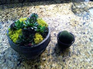 Plant your own small container garden at an upcoming Vail library workshop.