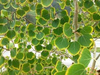 Photographer Sunny Smith snapped this photo of aspen leaves at the Vail Post Office this week. Smith, a Vail resident, is the co-owner of Vail art gallery The Shelton Smith Collection.