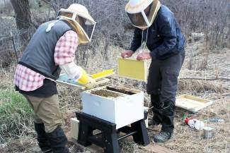 Workers at Eagle Ranch Golf Club maintain the new bee hives located on the property. The course recently retained its designation as a Certified Audubon Cooperative Sanctuary.