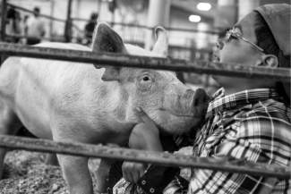 Logan Trujillo, 11, of Sweetwater Bandits 4-H Club in Gypsum, gives his pig, Snort, some love and marshmallows at the Fair and Rodeo in Eagle. Trujillo says the 4-H club is a great experience to meet friends and acquire new life skills.