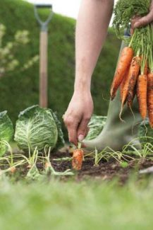 Growing your own food is becoming increasingly popular for many reasons.