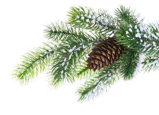 Many elements like evergreens and pine cones used for holiday décor in December transition well into simple winter interest in outdoor containers during the months ahead.