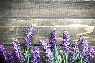 Using natural materials like sweet almond oil, distilled water, alcohol and various essential oils from plants like lavendar (pictured here), The Science Behind Perfume class will also explore the science of smell, the history of perfume and provide students with supplies to make their own perfumes.