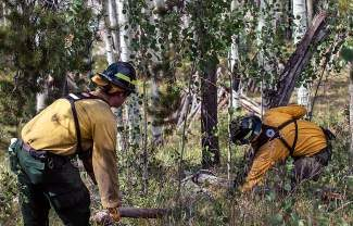 Vail wildland fire crew members gather dead trees and timber from the ground during a summer project to thin  fire fuel from around nearby homes and forests in Vail. The Vail Fire Department now has a map detailing the potential wildfire danger for every private home in town..