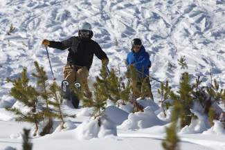 Damon Redd and Nick Wyman find a line between some young lodgepole pines in Vail on Friday.