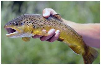 Warm water and low flows in the county's waterways have prompted the Eagle River Watershed Council to ask anglers to fish before 2 p.m., when water temperatures are lower.