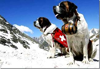 Vail Avalanche Rescue Dogs