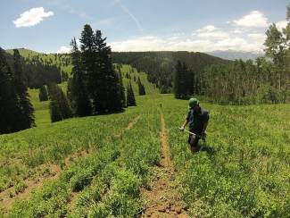 An off-road vehicle rider aids in trail maintenance during a work day in June near Avon. Local riders of off-highway vehicles are hoping that the Forest Service will enact rule changes that will restore access to 133 miles of trails that were closed to them under a recent travel-management plan update.