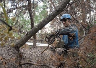 Kristin Anderson/Vail DailyVail Wildland Fire Hand Crew member Ray Dixon removes limbs from a fallen beetle kill tree Monday in Vail.