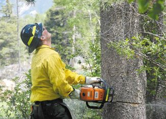 Kristin Anderson/Daily file photo Vail Fuels Mitigation Wildland Crew member Nate Kohut using a chainsaw to cut down a pine-beetle-infested tree last summer in Vail.