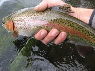 Special to the Vail DailyThe Vail Valley had one of the first Trout Unlimited chapters in the U.S. Now, after a dozen years of being part of a regional group, the local chapter is back in action, and has already hosted several events, and a general meeting is planned for January.