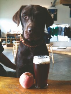 Special to the DailyThe Peach IPA beer tapping party at Crazy Mountain Brewery on Sunday is a fundraiser benefitting the Megan Councilman Fund, a non-profit run by the Humane Society that provides financial assistance for pets requiring emergency veterinary care.