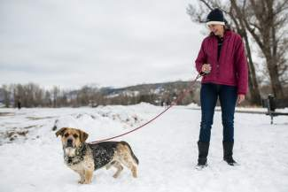 Anne Heckman takes Chevy for a walk at Eagle Fairgrounds on Friday. Chevy is one of about 100 dogs that were left stranded in Eagle county after the truck that was transporting them to Washington State slid off the road on Vail Pass.