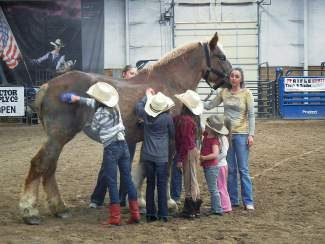 The Mountain Valley Horse Rescue's Rescue Rendezvous this weekend is a horse expo where trainers will do demonstrations and classes with rescue horses.
