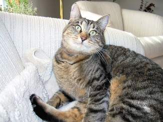 Cindy Duncan's cat Ellie is a brown tabby with a soft reddish belly and white chin, and has been missing since Sept. 11. They live in the Longhorn Road area of Singletree. An animal communicator tells Cindy that Ellie is still alive, that the cat lived for a while hunting mice and finding water. The animal communicator now tells Cindy that Ellie approached a woman and convinced a woman to let her into her house. Cindy and her husband have had the cat for 12 years. They love Ellie nd want her back. Contact her at: