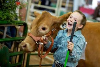 Friday is the Beef Show at the Eagle County Fair Grounds. Come down and support these 4-H kids that have been working with their animals since last fall. They have been out each day all winter feeding and making sure these animals have fresh water. The show starts at 9 a.m., we'll have coffee ready for you, and maybe a doughnut.  A fun thing to watch is the round robin at 2 p.m.  This is where all the winning Showmen of each livestock class work with all the different animals.  It's a fast a fun time at the Eagle River Center.   If you can't make the show please join us for the Junior Livestock Auction on Saturday.  If you've never been to a livestock auction you should set aside the time, you'll have fun and hopefully bid on some great animals. The auction activities start at noon with a BBQ.  We hope to see you there.