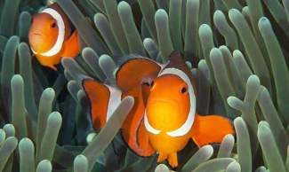 Beaver Divers is leading a group of adventures divers to Tubbataha, Philippines in May! Tubbataha is a World Heritage site. Since divers discovered Tubbataha in the late 1970s, it has become recognized as one of the most remarkable coral reefs on our planet. It also ranks among the top eight dive sites in the world. Because of its isolated location, Tubbataha can only be visited on a liveaboard boat. Divers can experience the reefs' dramatic underwater terrain, awe-inspiring biodiversity and encounter large marine animals such as sharks, turtles and manta rays. By visiting Tubbataha, we will play a key role in Tubbataha's future and also assist in the recovery effort of the Philippines by bring needed tourist dollars. Visit www.beaverdivers.com for more information.