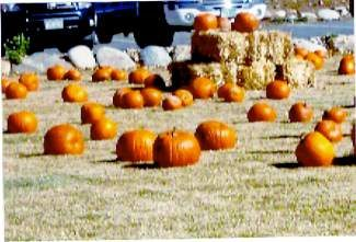 Pumpkin Patch and Fall Festival!