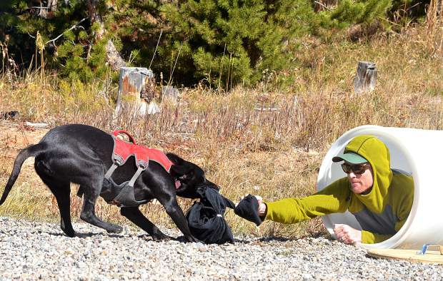 Avy dog Max, from Arapahoe Basin Ski Patrol, pulls A-Basin patroller Kyle Hagadorn from a faux-snow pit during dryland training hosted by the Colorado Rapid Avalanche Deployment program in mid-October.