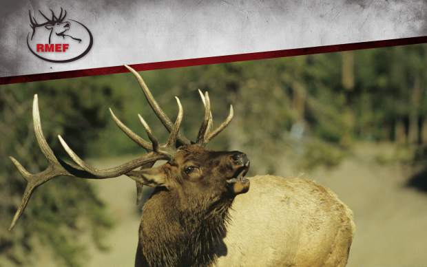 Attend a party, help an elk at Rocky Mountain Elk ...