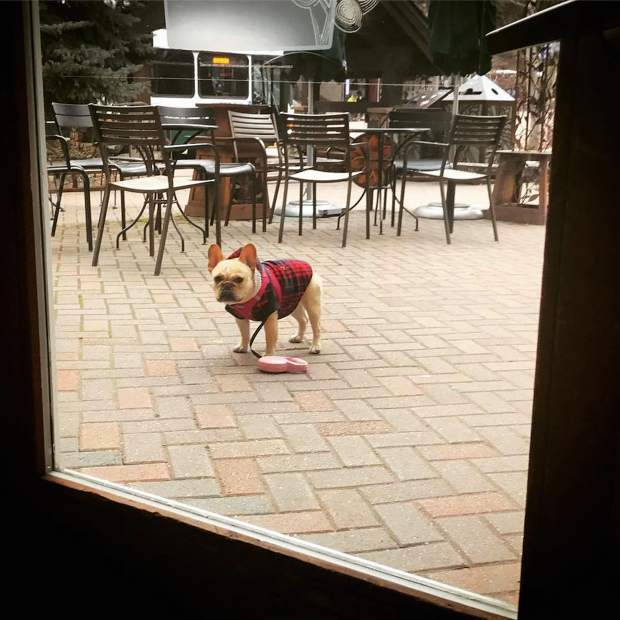 @bali_frenchie: Wait ... what?! No Starbucks for me? #VailLive