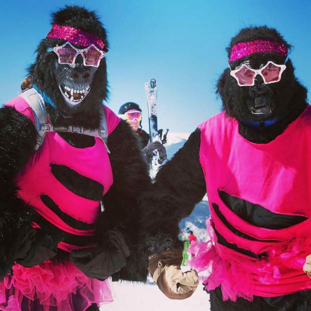 @pinkvail: On March 25, gorillas hate cancer, too! #PinkVail #VailLive