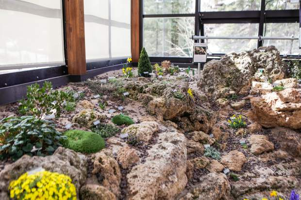 The tufa rock is a unique limestone rock formed from organic matter and water and is not volcanic. The rock is good for growing alpine plants since its porous surface allows root systems to take hold.