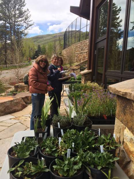 Betty Ford Alpine Gardens In Vail Selling Unique Plants
