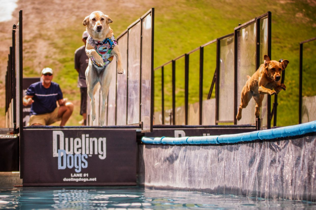Ken watches his yellow lab, Suagr, leap ahead during the Dueling Dogs Competition on Sunday in Vail.