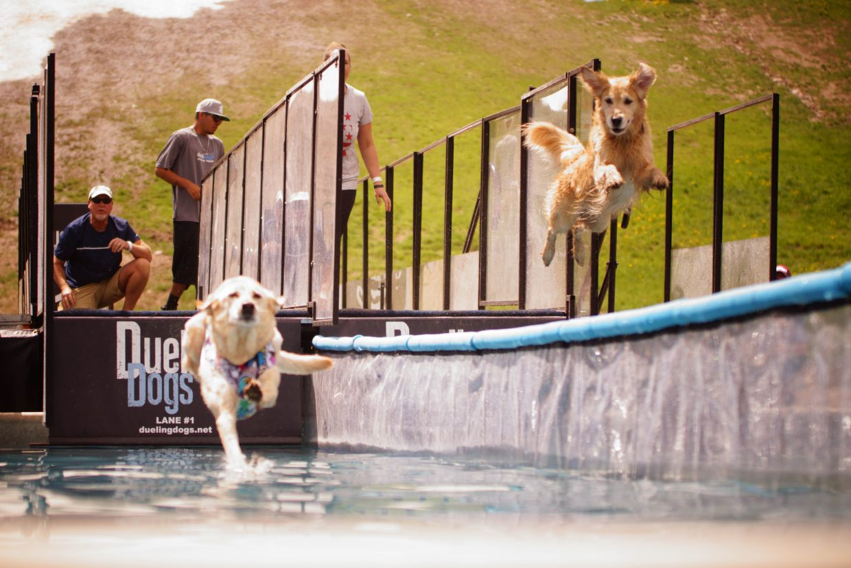 Winchester Copperpot (right), watches his opponet Sugar as they leap into the Dueling Dogs Pool on Sunday in Vail.