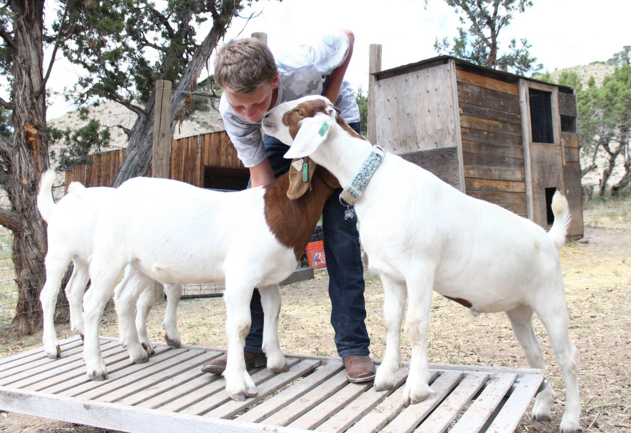 James Bretz, 13, practices showing his goat Curly, but his other two goats, Moe and Larry, crash the practice on Friday, July 14, in Eagle. This year will be the first time that Bretz will show goats at the Eagle Fair.