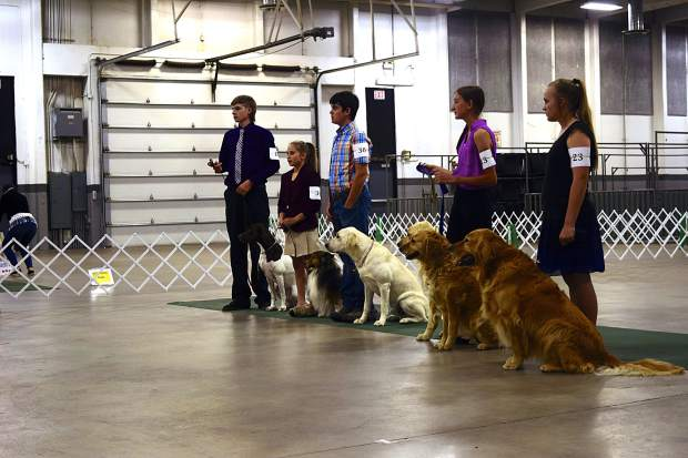 A group of 4-Hers wait to hear their results Sunday at the Weld County Pre-Fair Dog Show.