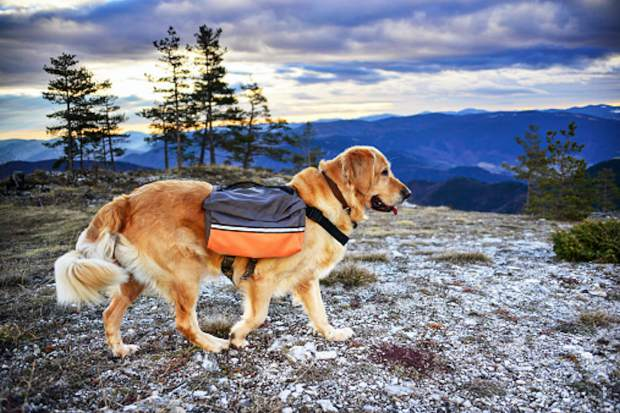 The world of dog gear continues to grow, from collapsible water bowls to heavy-duty harnesses to dog backpacks.