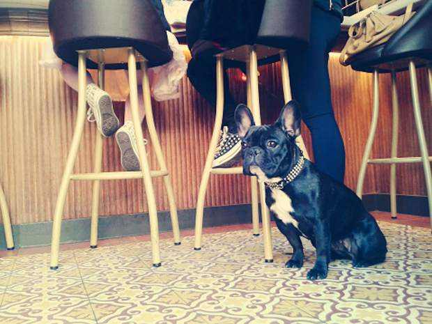 Many bars in Vail allow for dogs, and some were even named after canines.