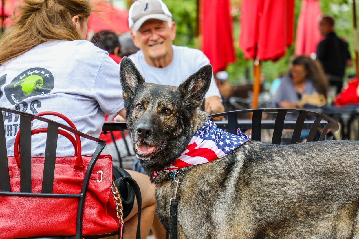 Falco, a retired military dog, keeps watch while his humans, Shelli and Randel Patty, order food at the Yappy Hour for the K9s for Vets event on Tuesday at Chophouse in Beaver Creek. If passed, the new Colorado law would be permissive, meaning businesses can choose to allow dogs.