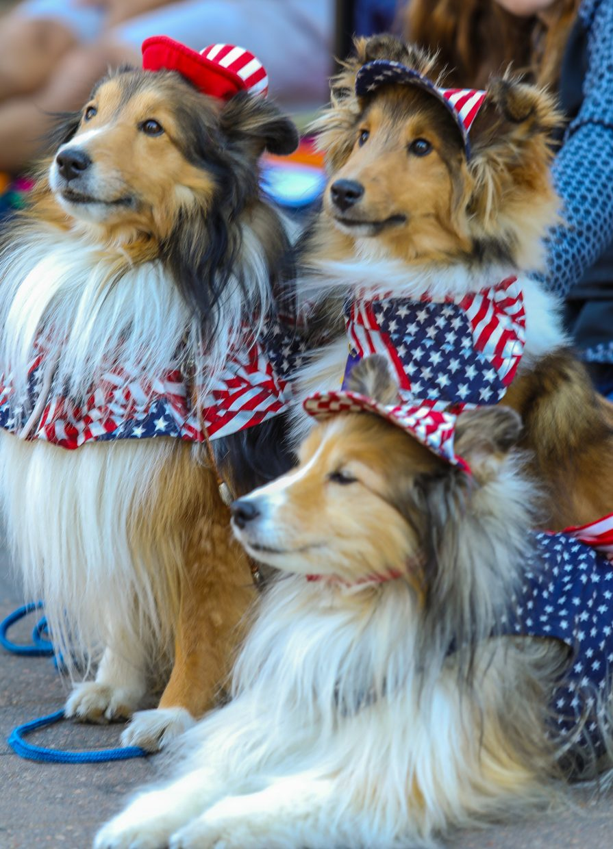 Tally, Jenni and Quihley soak in the sites, sounds and smells of the July 4 parade for Vail America Days on Tuesday in Vail. Many of the canines were dressed for the occasion.