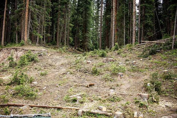 Construction zone where tree removal took place on Friday for the alpine coaster going in near Elk Camp in Snowmass.