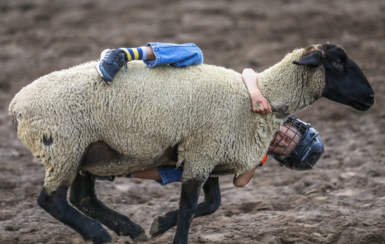 Nate Beuche, 8, of Edwards tries to hang on for dear life for the Mutton Busting during the Beaver Creek Rodeo Thursday in Avon. This was the last rodeo for the 2017 season.