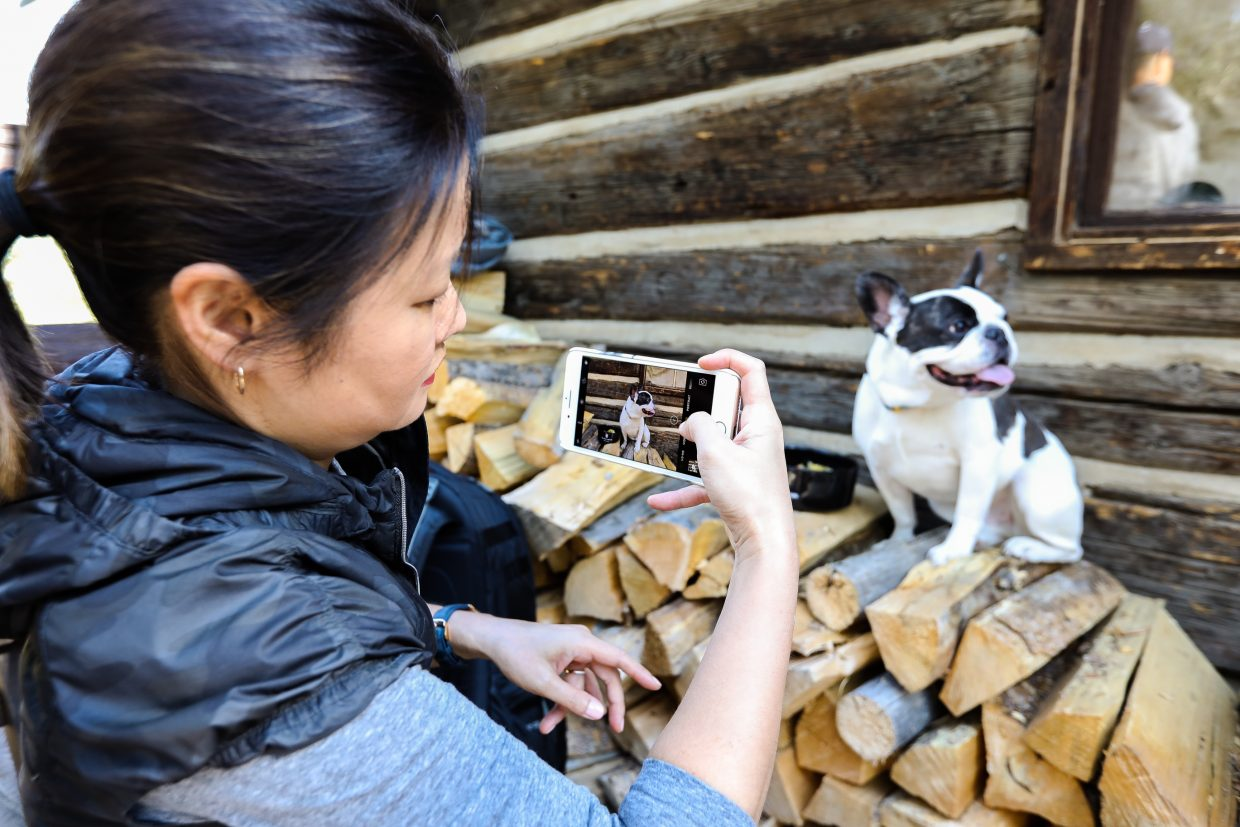 Esther Chang takes a photo of Cooper the French Bulldog at Anderson's Cabin at the Ritz-Carlton Bachelor Gulch in Beaver Creek. Cooper has 154,000 Instagram followers.