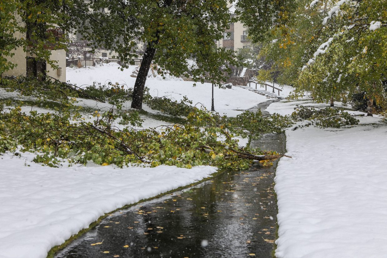 The heavy, wet snow took down limbs and small trees Monday, Oct. 2, in Beaver Creek.