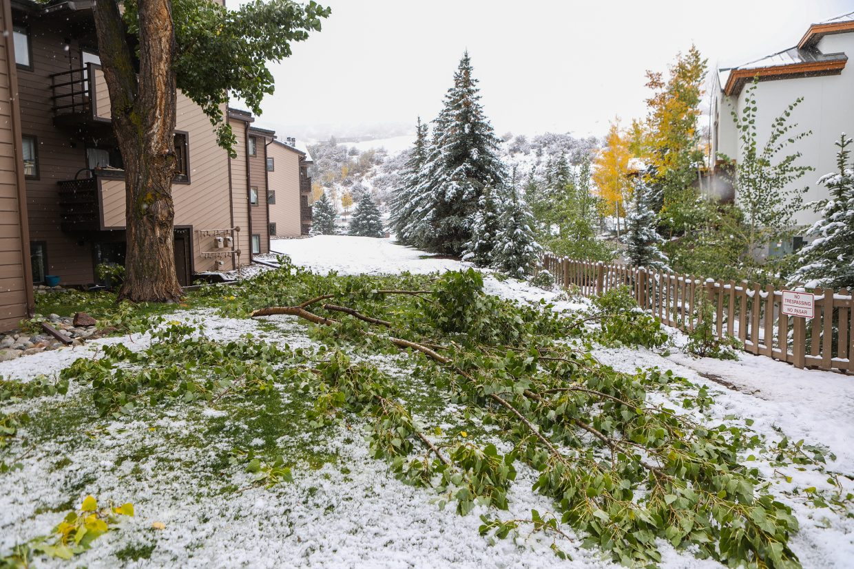 Large tree limbs were taken down by the heavy snow Monday, Oct. 2, in Avon. The heavy snow took its toll on limbs and trees around the Vail Valley.