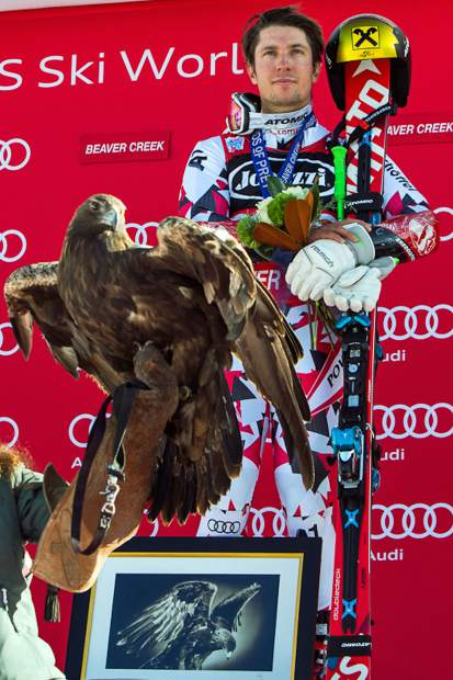 Meeting Actual Birds Of Prey At Beaver Creek S World Cup Races Vaildaily Com