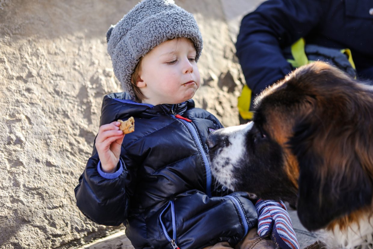 Holly the St. Bernard investigates Denver resident Louie Saxon's cookie during the daily Cookie Time on Monday, Jan. 22, in Beaver Creek. Chocolate chip cookies are served daily 3 p.m. at the base of Beaver Creek by children's ski school.