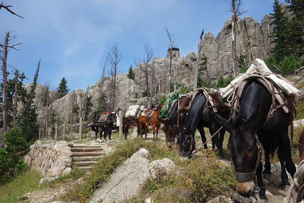 A USForest Service Pack String Ventures Into The Wilderness Glen Ryan Mule Packer With 27 Years Of Experience And Stories Will Be One Featured