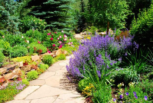 A Growing Legacy: Betty Ford Alpine Gardens In Vail Has Busy Summer Schedule