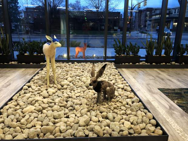 The lobby of the Embassy Suites Boulder welcomes guests with a work of art by Lindsay Pichaske that features a pink coyote enviously peering from outside the hotel to the lobby inside where a long-eared hare and blue-maned mountain goat reside.