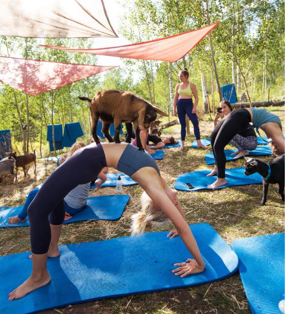 Reservations are highly recommended for goat yoga at Vail Stables. Call 855-743-3824 or visit www.vailstables.com.