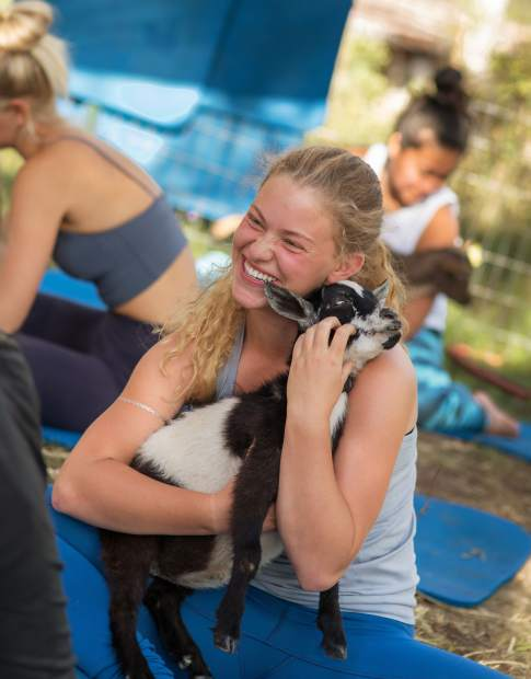 Goat yoga combines nature, goats and